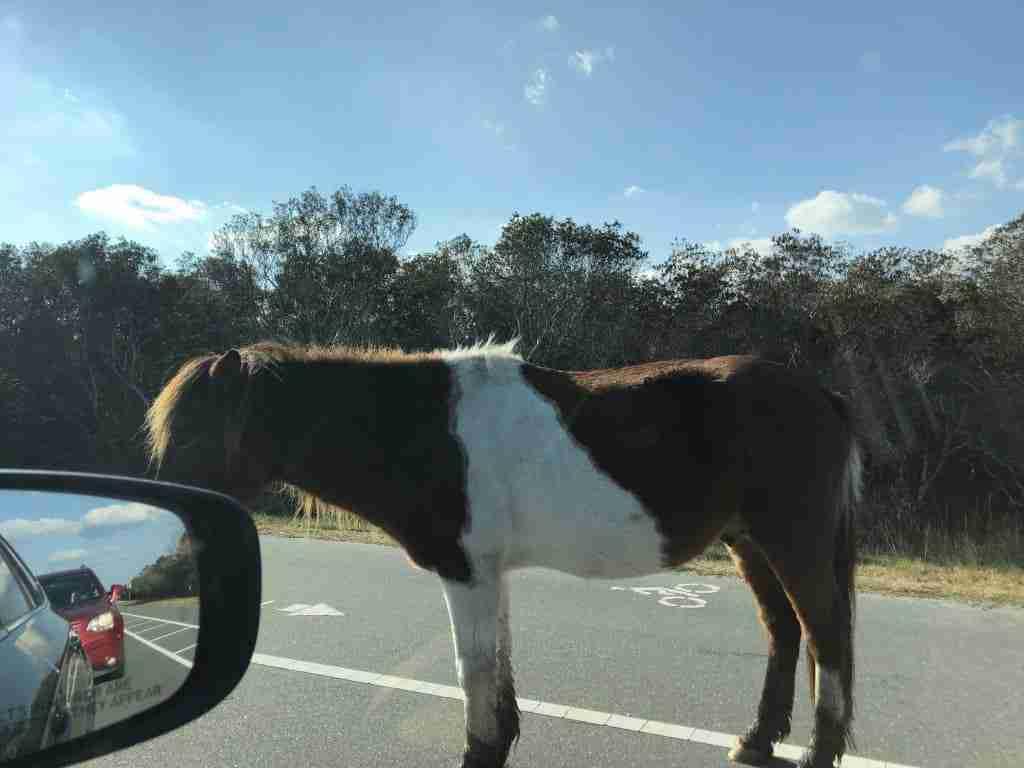 Assategue Pony